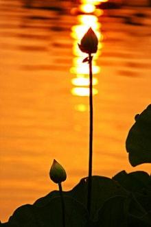 你若盛开,清风自来。心若浮沉,浅笑安然。
